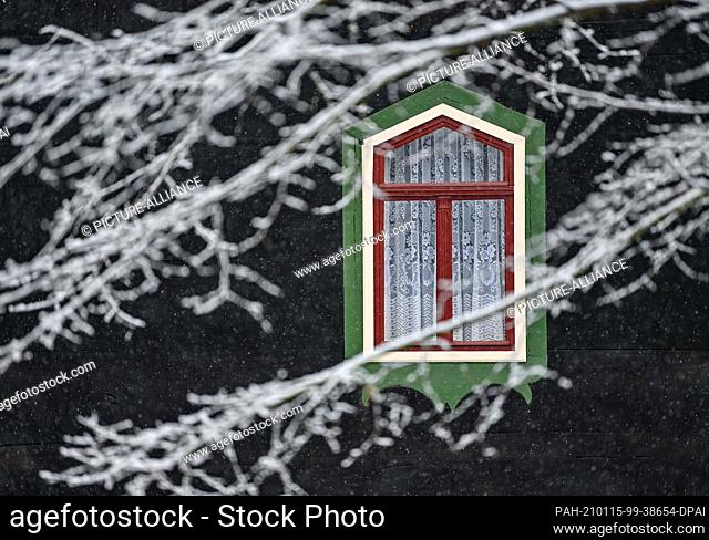 15 January 2021, Brandenburg, Lehde: Behind the snow-covered branches, a colourful window can be seen on a wooden house in the Spreewald village