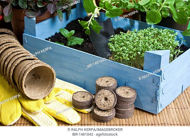 Herbs with a wooden box and garden utensils