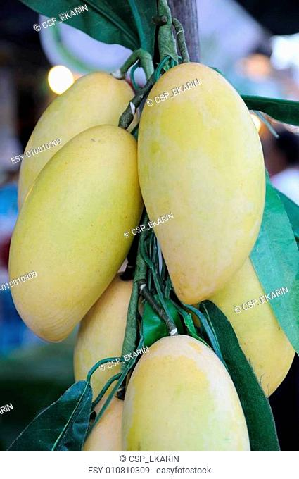Yellow mangoes hanging in market, artificially