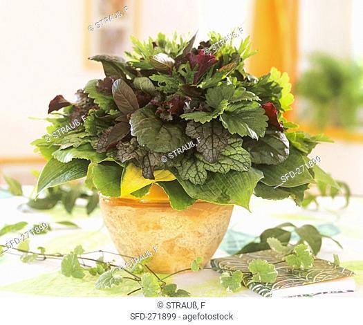 Arrangement of foliage Heuchera, Hosta etc