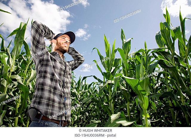 Farmer amongst crop