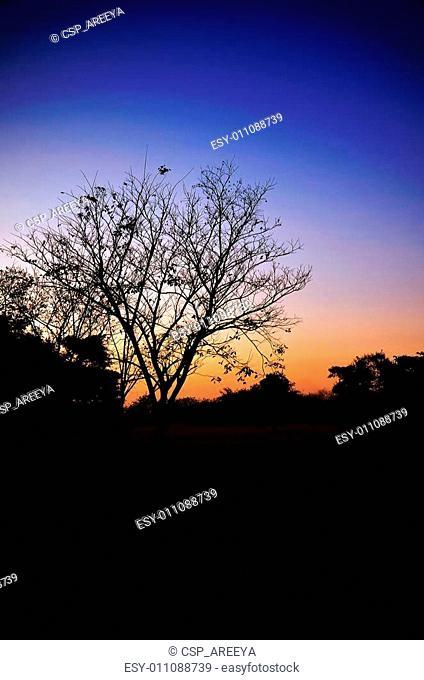 Silhouette Tree in Twilight Light