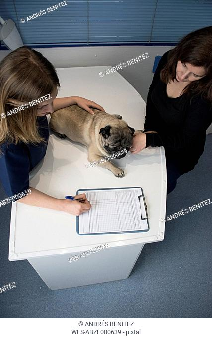 Veterinarian talking with owner of a dog in a veterinary clinic