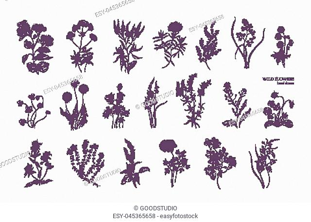 Bundle of detailed botanical drawings of blooming wild flowers. Collection of herbaceous flowering plants hand drawn with contour lines on white background