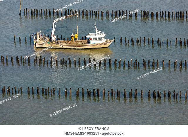 France, Vendee, La Faute-sur-Mer, boat setting new mussel poles (aerial view)