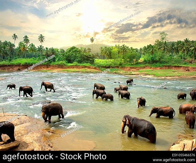 wilderness, river, elephant family