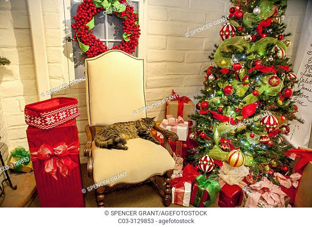 A snoozing cat relaxes on Santa's chair in the Enchanted Gnome forest