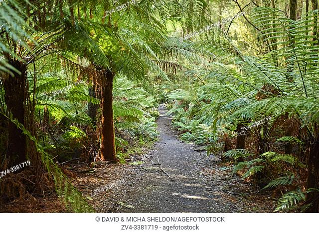 Nature landscape of a hiking way through the forest in the Great Otway National Park in spring, Australia