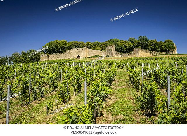 View of vineyards and Arlay Castle (department of Jura, region of Bourgogne-Franche-Comté, France)