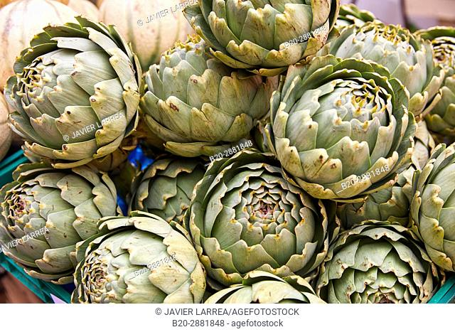 Artichoke, Market, Hendaye, Aquitaine, Pyrenees Atlantiques, France
