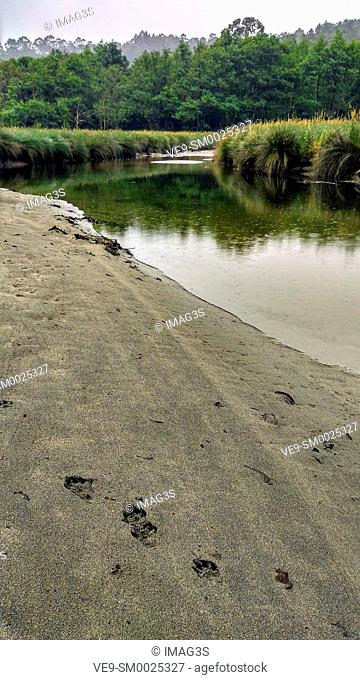Otter (Lutra lutra) trace near Barayo river. Barayo is a Partial Nature Reserve, encompassing cliffs, dunes and beaches. Valdés and Navia municipalities
