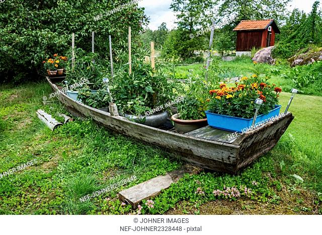 Flowers and vegetable plants in wooden boat
