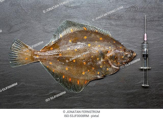 Fresh fish with syringe on counter