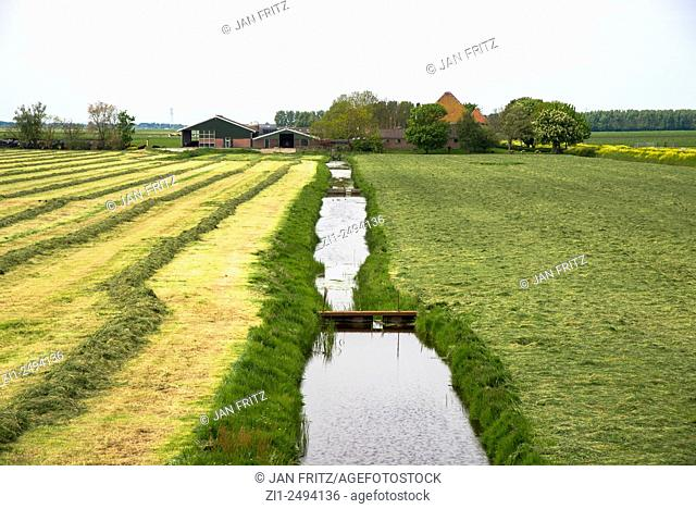 farm with mowed farmland in Beemster polder in Holland
