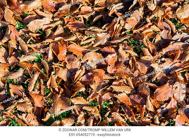 Autumn leaves at the bottom of a green
