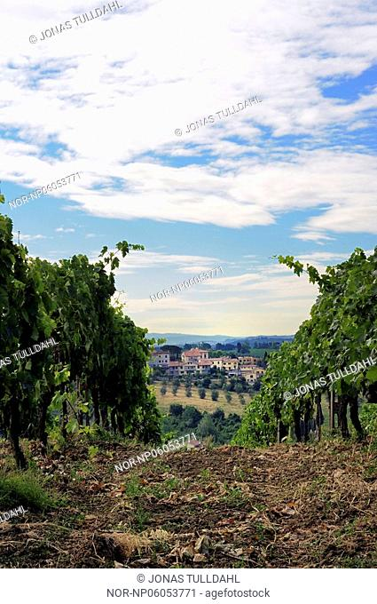 Winefields in Vinci. Tuscany. Italy