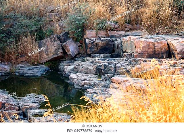 Scenic view of deciduous forest and creek in Ranthambore national park, India