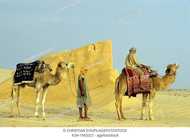 camel drivers and dromadary in Lareguett dunes around Nefta, Tunisia, North Africa