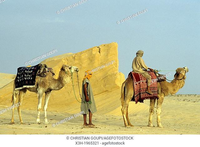 camel drivers and dromadary in Lareguett dunes around Nefta, Tunisia, North Africa