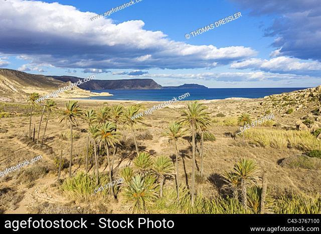 Palms at the beach El Playazo. Aerial view. Drone shot. Nature Reserve Cabo de Gata-Nijar, Almeria province, Andalusia, Spain
