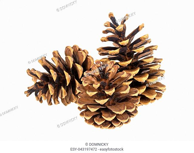 Group of three pine cones on white background