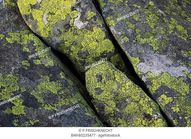 lichenes on a rock, Switzerland