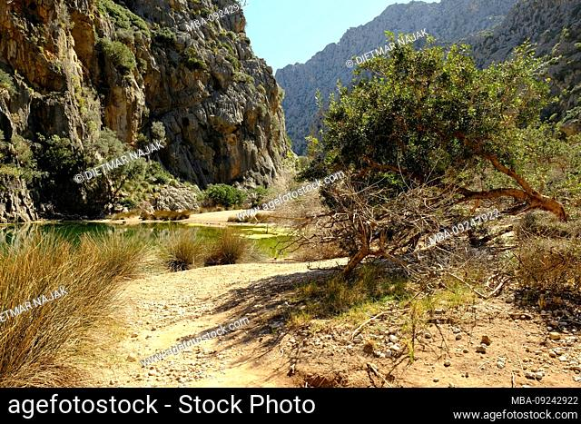 The canyon Torrent de Pareis at Sa Calobra in the Serra de Tramuntana, Mallorca, Balearic Islands, Spain