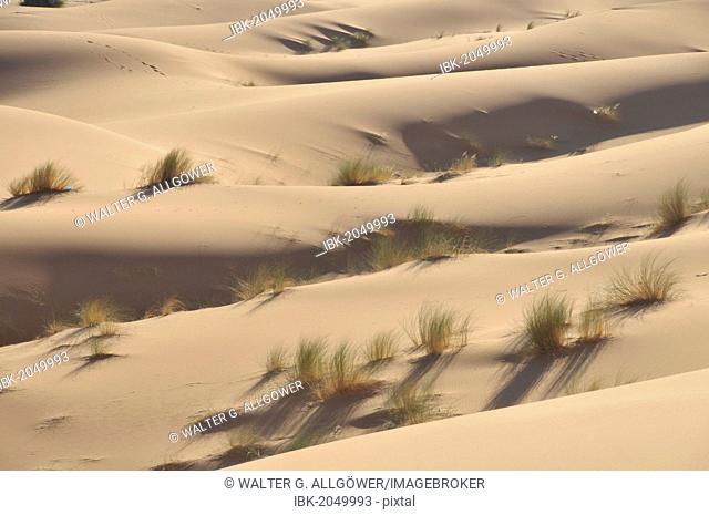 Desert, sand dune of Erg Chebbi, Morocco, Africa