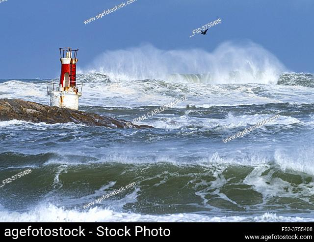 Swell in the Cantabrian Sea in the area of the Buoy Lighthouse of La Barra de San Vicente de la Barquera, at the mouth of the port