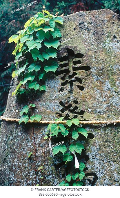 A large stone with kanji written on it, vines and a straw rope tied around it in Fushimi-Inari-Taisha. Kyoto city. Kyoto. Japan
