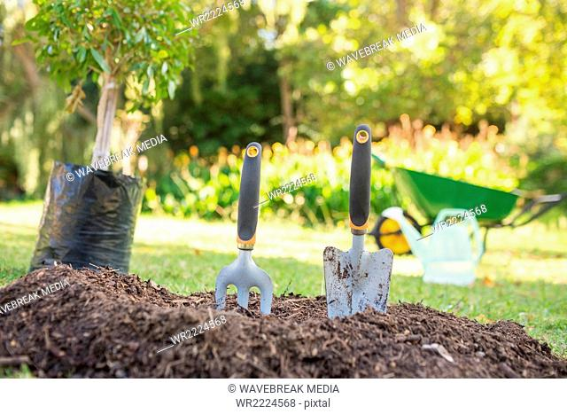 Potted flowers and gardening tools