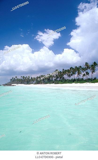 Scenic View of Zanzibar Beachfront  Zanzibar, Tanzania, East Africa