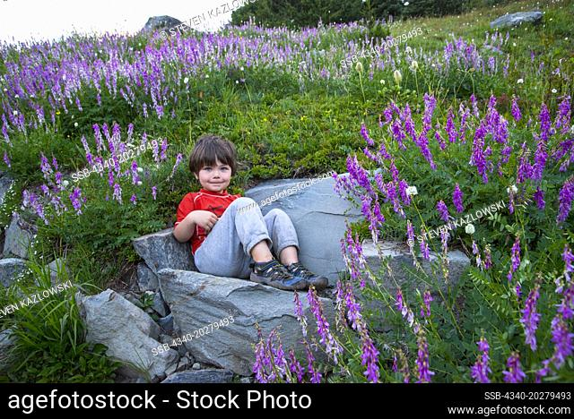 Young boy hiker takes a rest in a stone chair amidst blooming lupine, Grand Pass Trail, Grand Valley, Olympic National Park, Olympic Peninsula, Washington