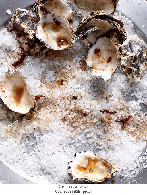 Oyster shells on sea salt