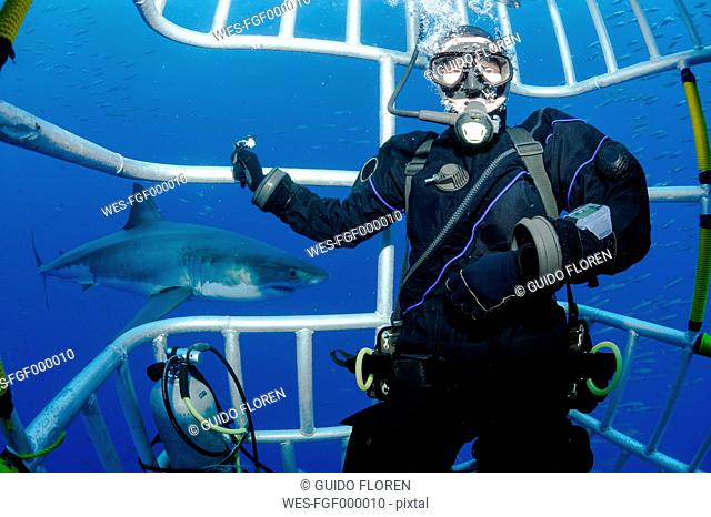 Mexico, Guadalupe, Pacific Ocean, scuba diver in shark cage with white shark, Carcharodon carcharias, in the background