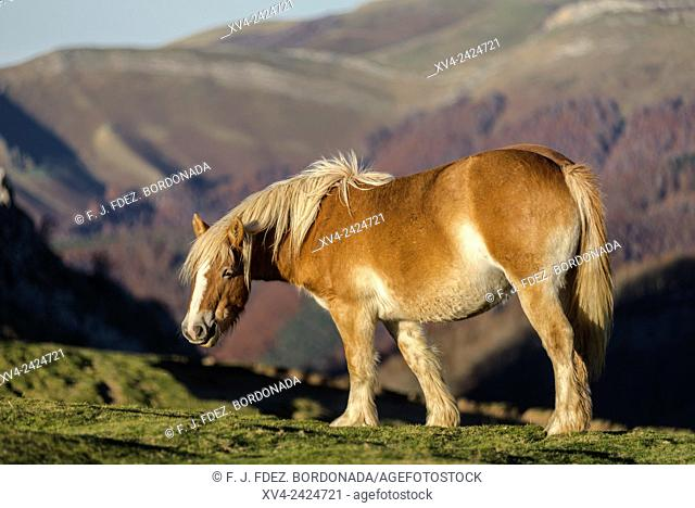 Horses standed at Tapla pass. Beauty area located in Salazar Valley. Ochagabia. Navarre. Spain. Europe