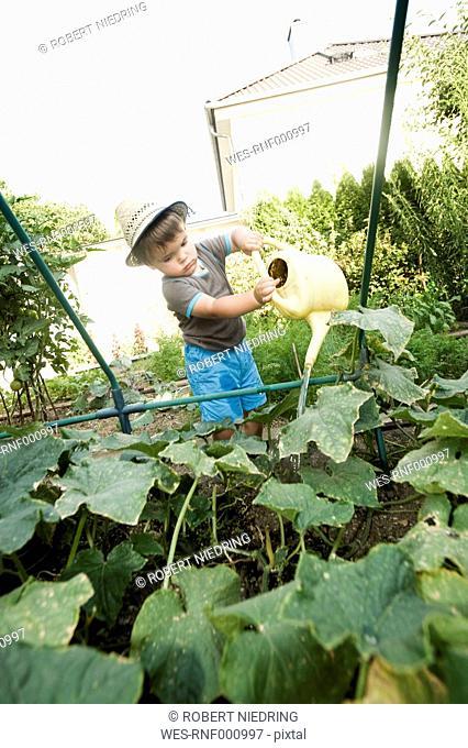 Germany, Bavaria, Boy watering cucumber vegetable in garden