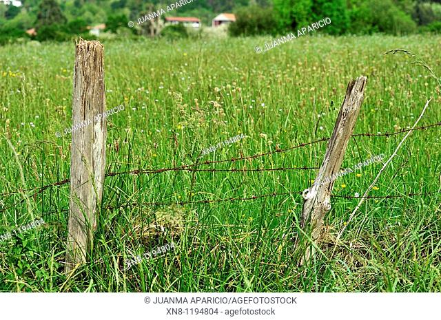 Meadow with wooden posts and barbed wire defining farm