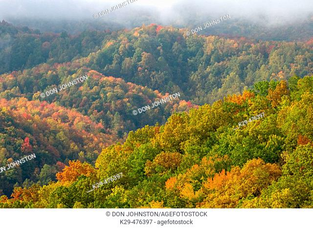 Colourful mountain ridges from Laurel Falls trail, Southern Appalachian autumn scenic. Great Smoky Mountains NP, TN, USA