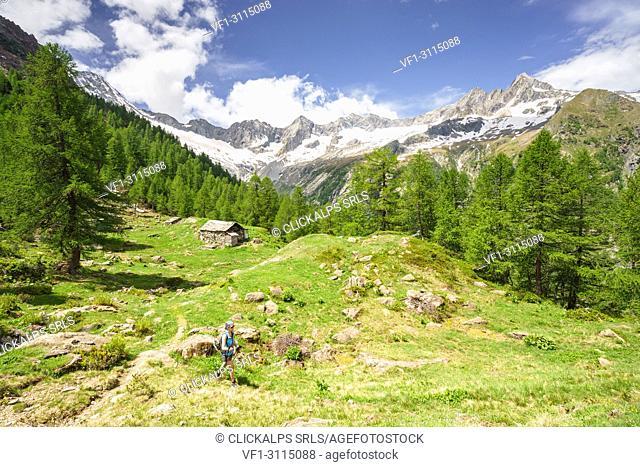 Hiking at Alpe Sentieri, Mount Disgrazia Group, Chiareggio, Valmalenco, Province of Sondrio, Lombardy, Italy