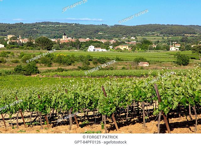 VINEYARD (WINE OF THE LUBERON) IN FRONT OF THE VILLAGE OF LA TOUR D'AIGUES, REGIONAL NATURE PARK OF THE LUBERON, VAUCLUSE (84), FRANCE