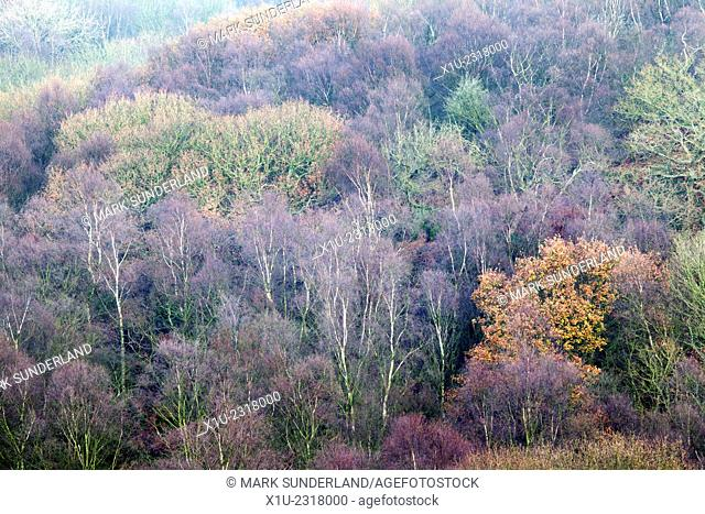 Autumn Trees in Guidecliff Wood from Guise Cliff near Pateley Bridge North Yorkshire England