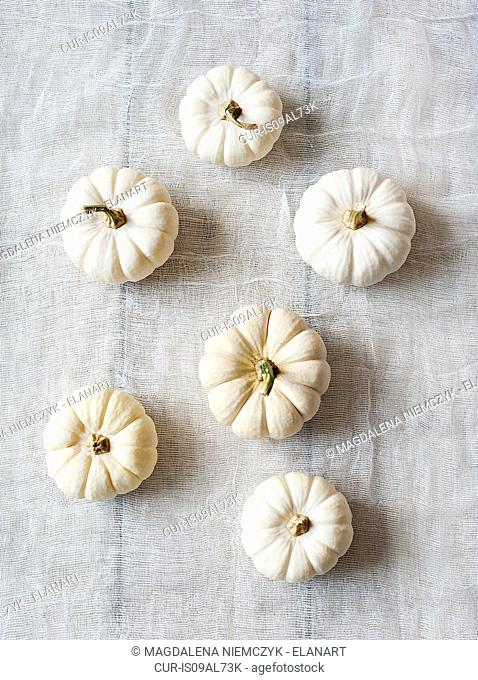 Small white pumpkins, overhead view