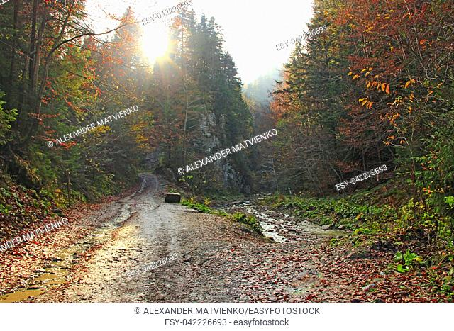 Autumn forest in woody mountains. Beautiful orange and red autumn forest. Hilly autumn forest. Mountain autumn landscape with road in colorful forest and sunny...