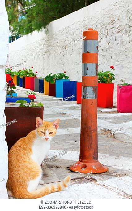 Cat on small street