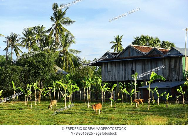 Traditional house in Koh Trong island near Kratie, Cambodia, South East Asia, Asia