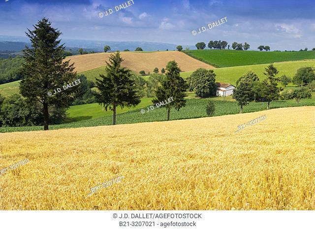 France, Auvergne, Cantal, Summer landscape by Cassaniouze