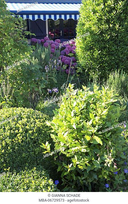 leafy garden, shrubs, hydrangeas