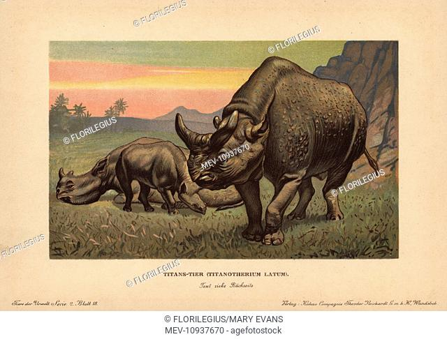 Titanotherium latum,, extinct genus of herbivorous mammal that lived during the Eocene. . Colour printed (chromolithograph) illustration by F