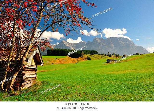 Germany, Bavaria, Isar valley, hump meadows, barn, mountain ash, Karwendel mountains